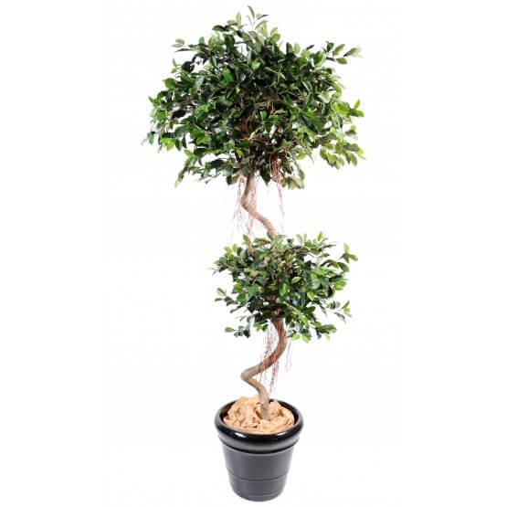 Ficus artificiel spirale 2 têtes 175 cm bois naturel