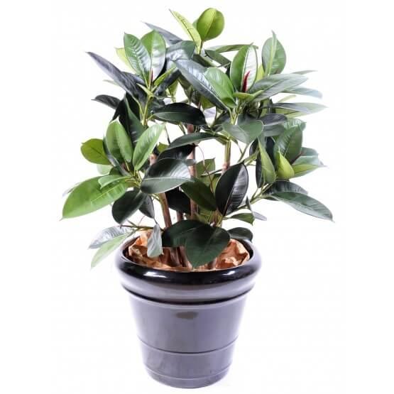 Ficus artificiel elastica
