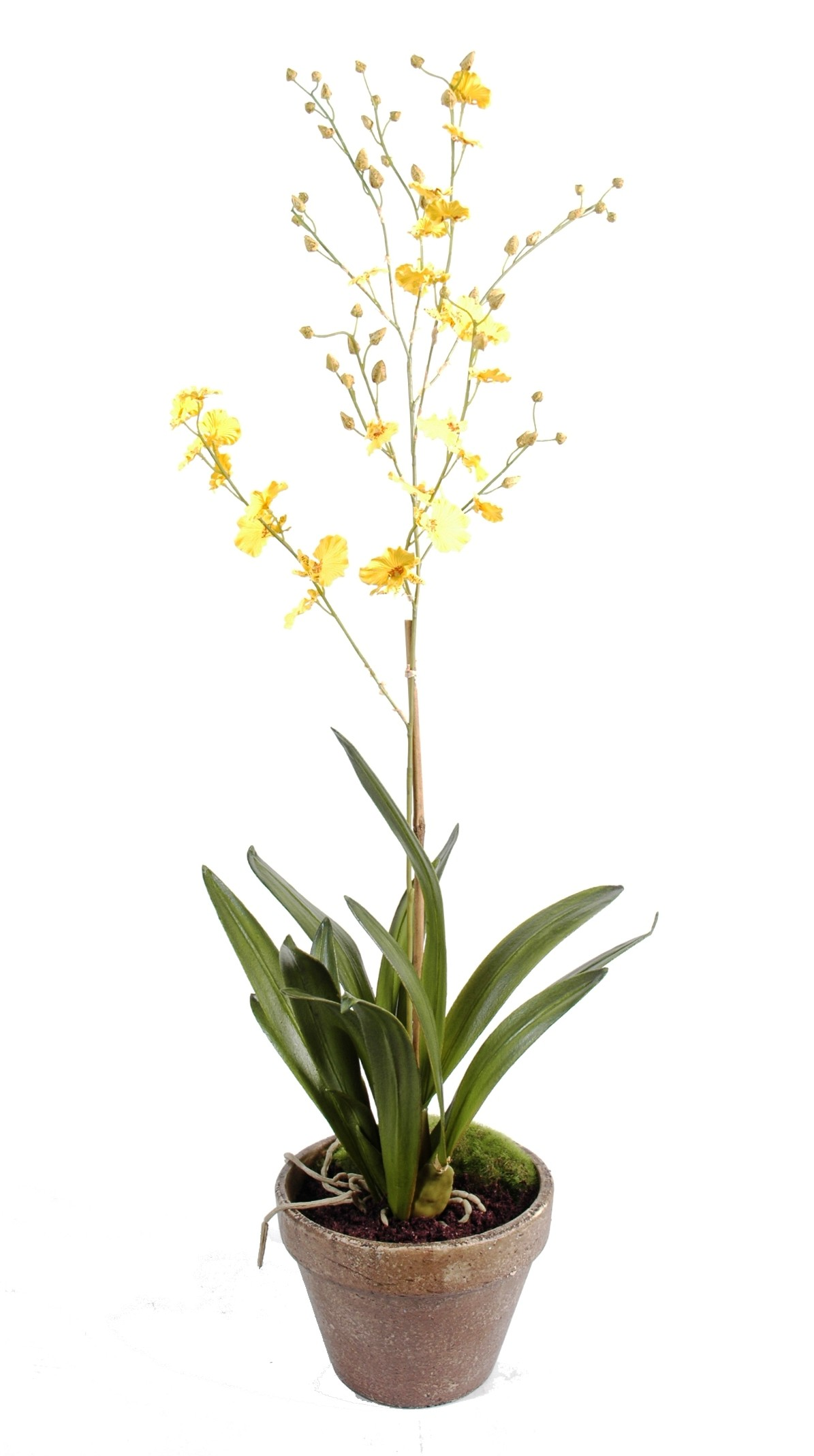 Orchid e artificielle dancing lady pot terre 50 07 for Orchidee exterieur