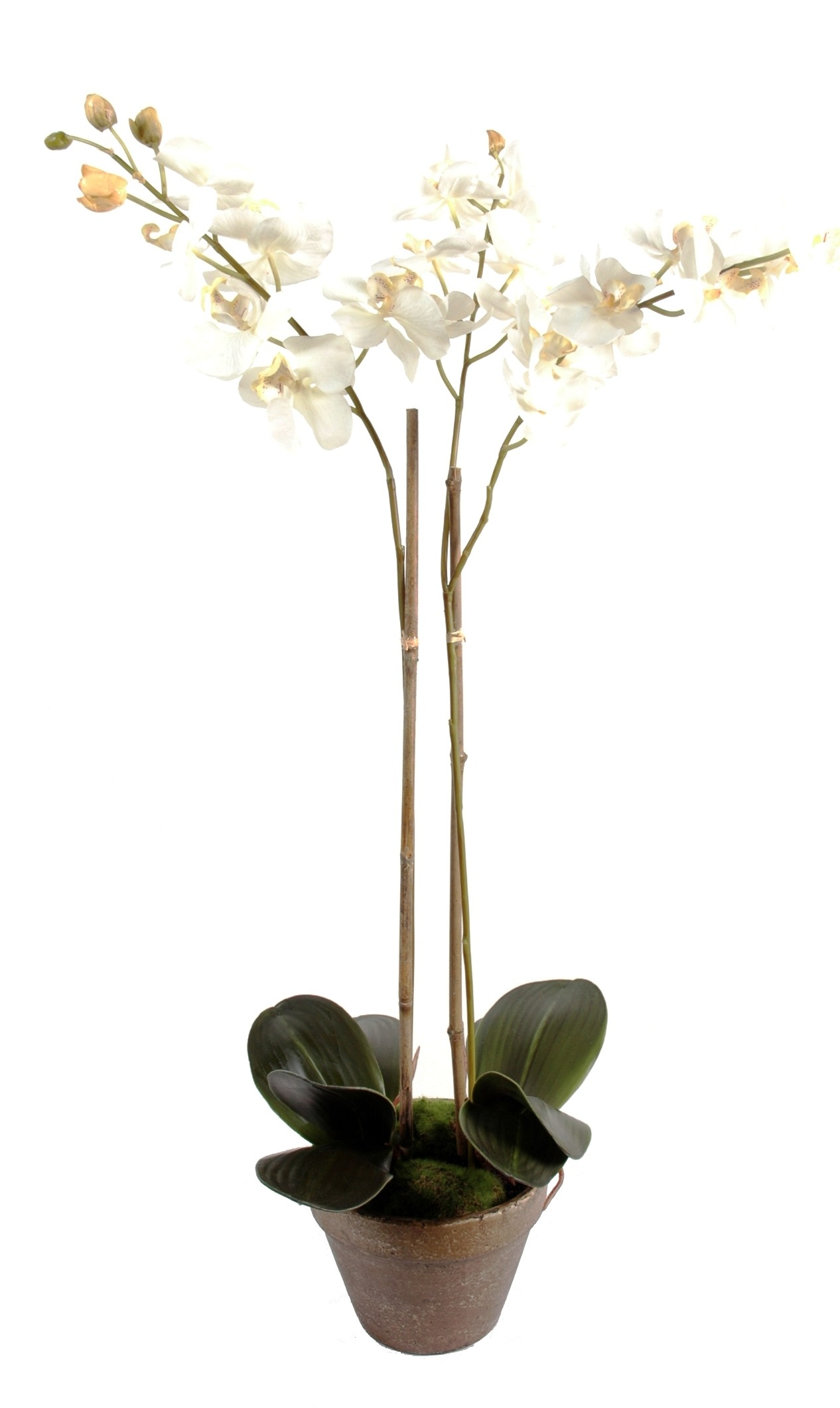 Orchid e artificielle phala nopsis pot terre 85 28 for Orchidee exterieur