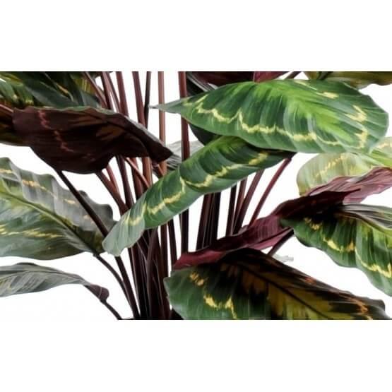 Plante Artificielle Dieffenbachia Feuilles Brunes-40 cm