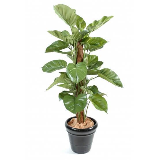 Pothos artificiel feuilles géantes - 150 cm