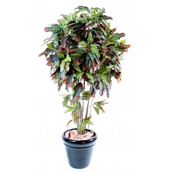 Croton artificiel tronc bois naturel - 3 tailles 110/150 et 180 cm