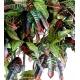 Croton artificiel tronc bois naturel - 110 cm