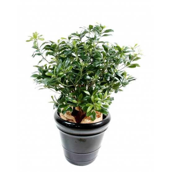 Pittosporum artificiel buisson - 55 cm