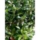 Pittosporum artificiel buisson - 55 cm