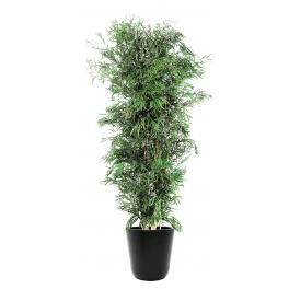 Eucalyptus stabilisé nicoly
