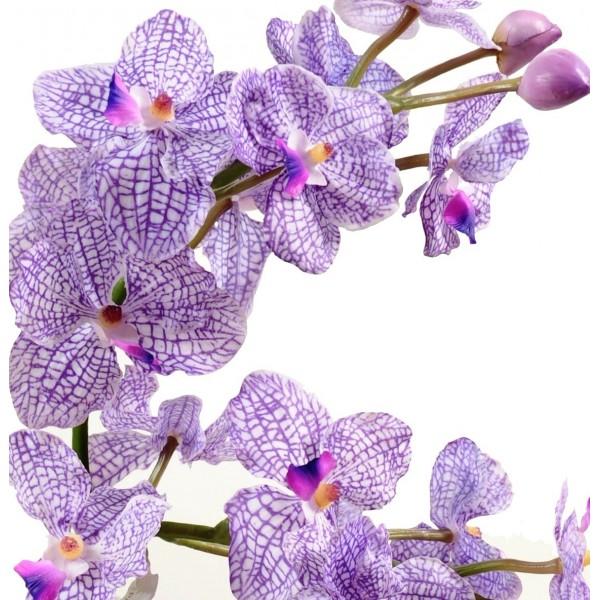 composition verrerie orchid e vanda 99 33. Black Bedroom Furniture Sets. Home Design Ideas