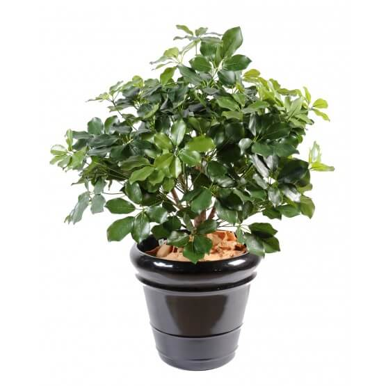 Shefflera artificiel Buisson 90 cm