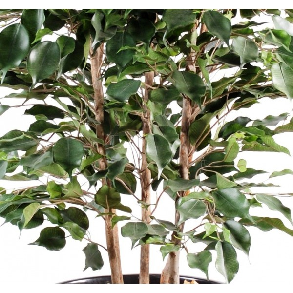 Ficus exotica buisson artificiel 85 00 for Ficus artificiel