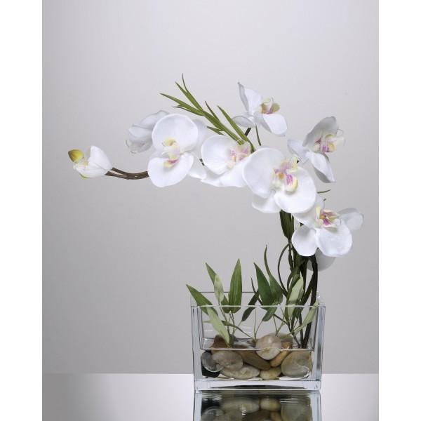 Jardini re d 39 orchid e blanche 64 21 - Arrosage orchidee en pot ...