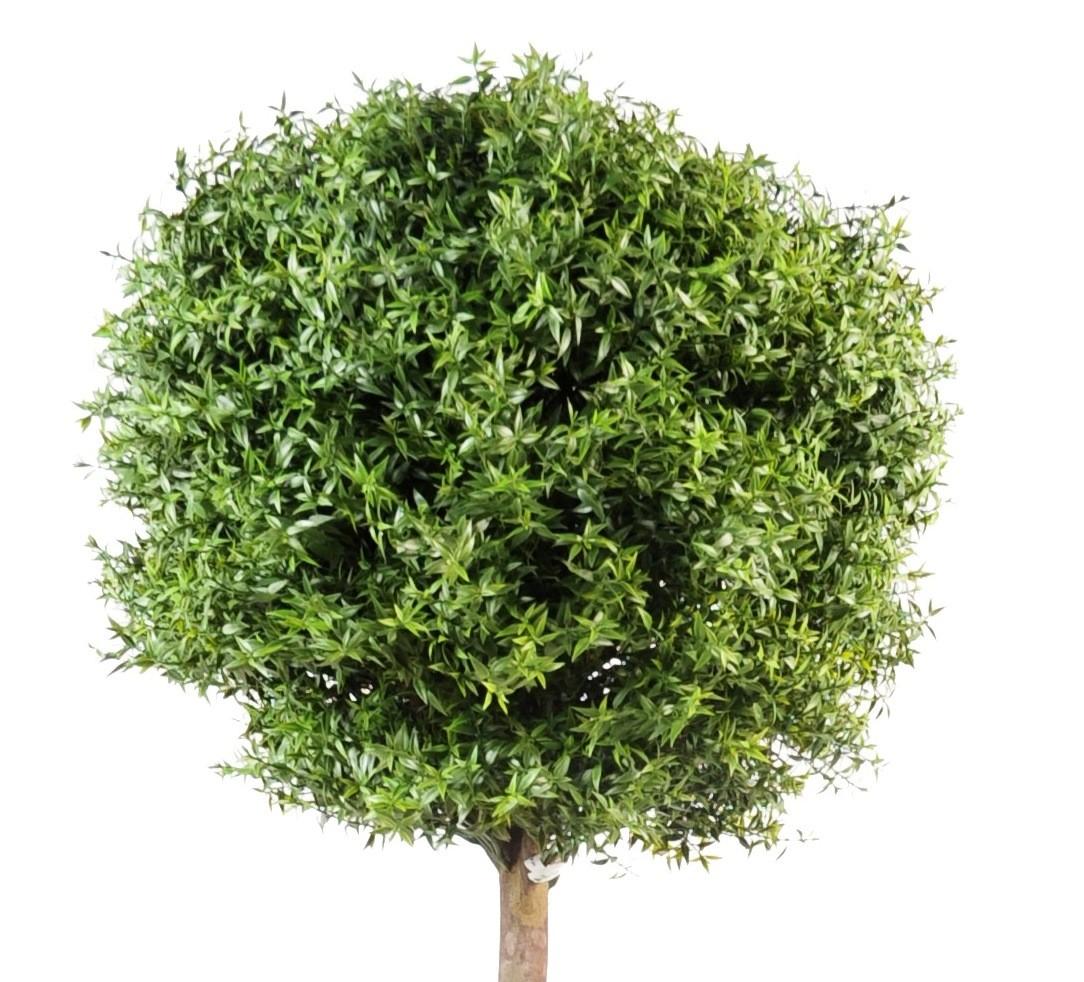 Eucalyptus artificiel plastique  tronc bois  119,40 ~ Eucalyptus Bois