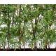Bambou oriental haie dense artificiel