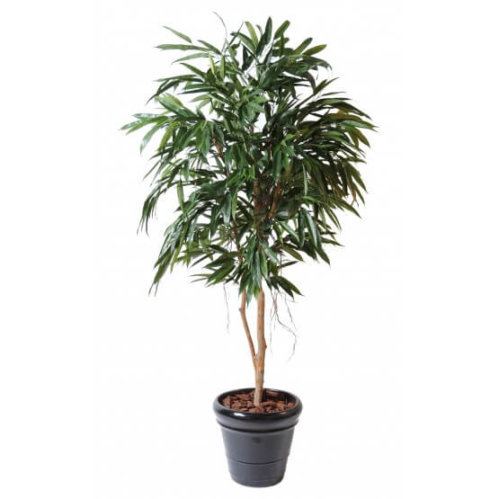 Ficus artificiel Bush Royal - 190 cm ou 250 cm