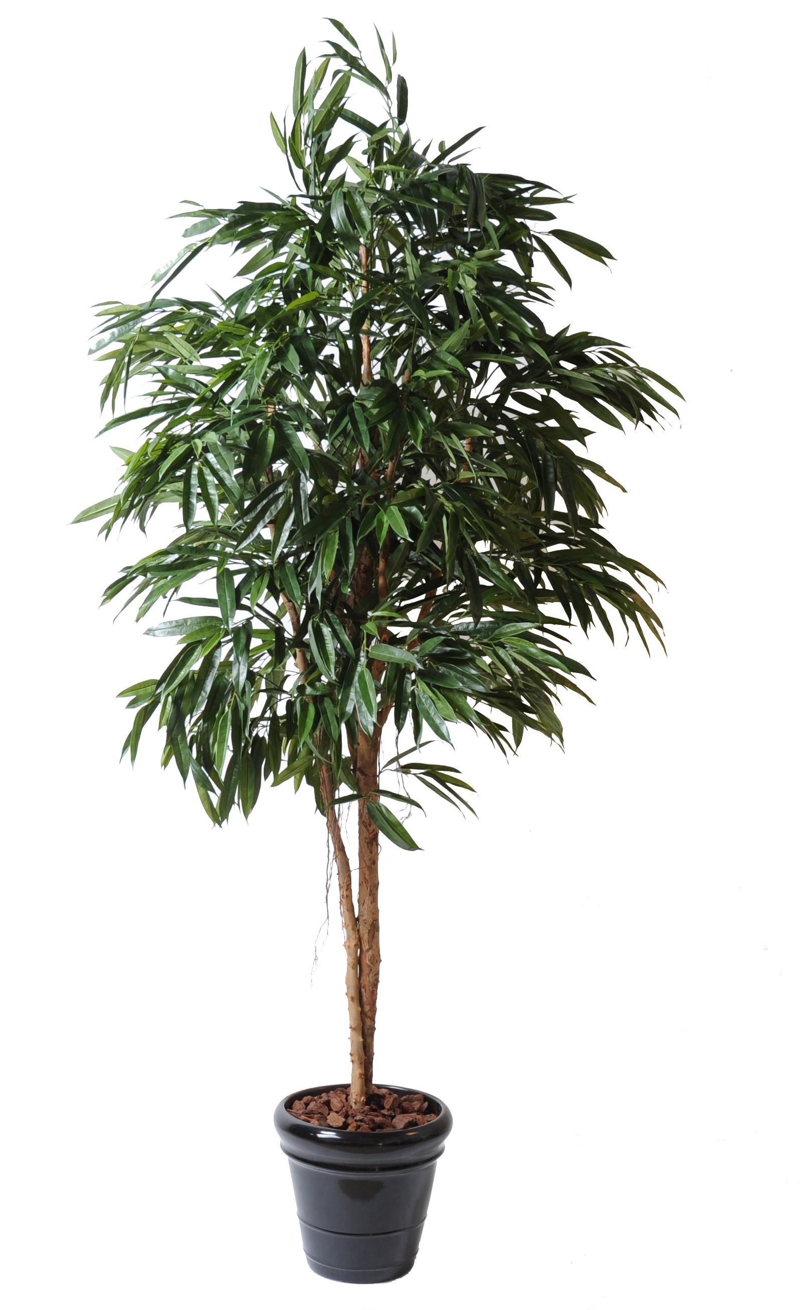 Ficus artificiel bush royal 190 cm ou 250 cm 179 00 for Ficus artificiel