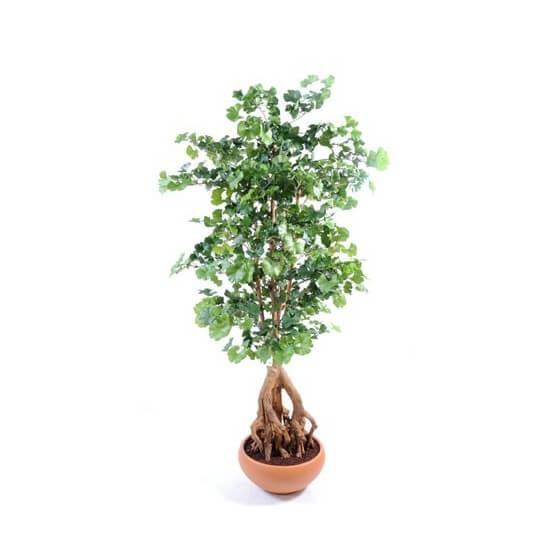 Ginkgobiloba Root artificiel - Hauteur 180 cm