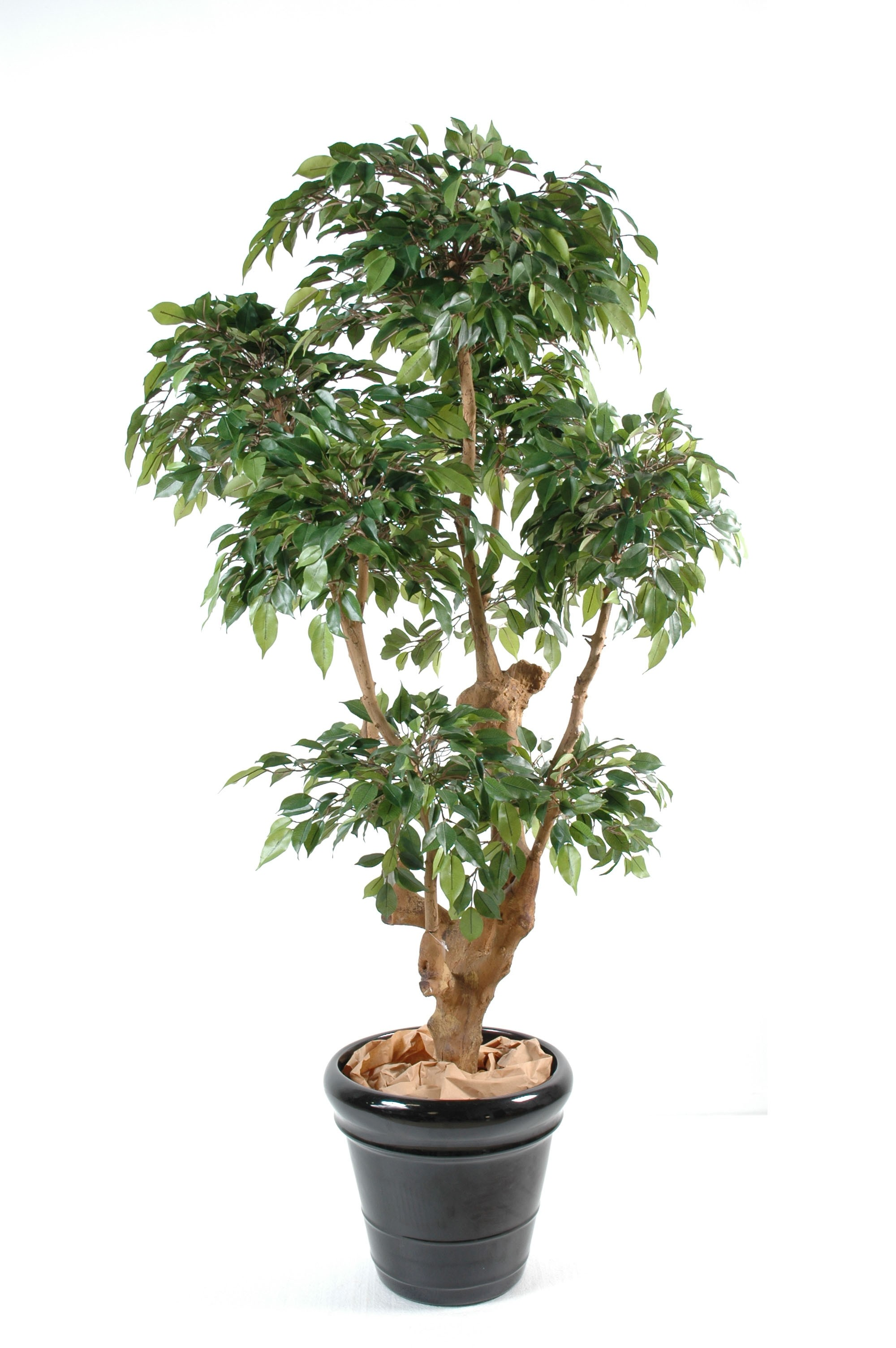 Ficus artificiel natasja 5 t tes 170 cm 300 00 for Ficus artificiel