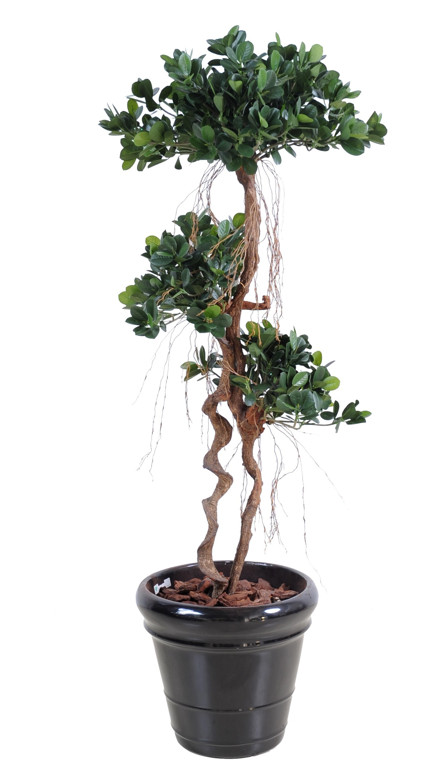 Ficus artificiel panda new 150 cm tronc bois naturel for Ficus artificiel