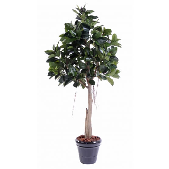 Rubber plant tree artificiel - 220 cm