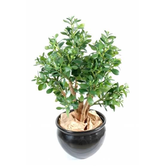 Crassula large artificiel - Plante grace