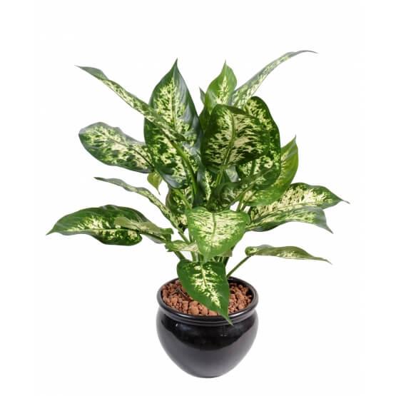 Dieffenbachia artificiel en pot plastique - 26 feuilles