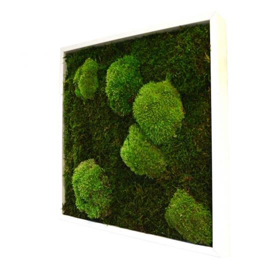 Tableau Vegetal Stabilise Sans Entretien Cadre Plantes Naturalisees