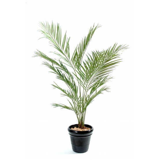 Kentia artificiel new palmes - 150 cm