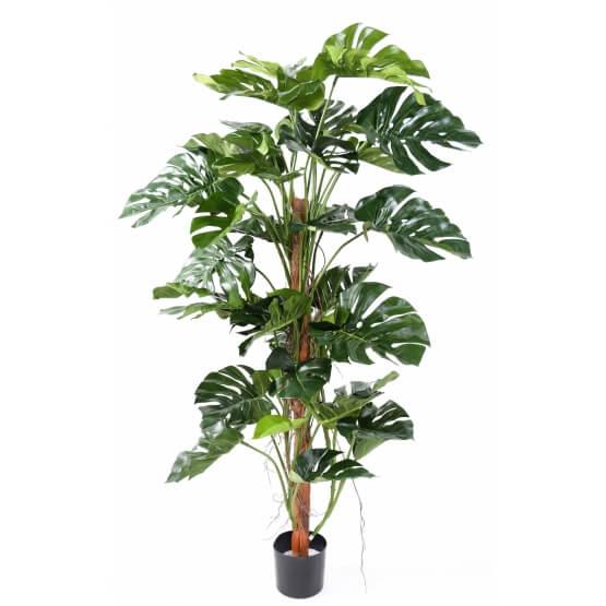 Phylodendron artificiel tronc coco - 160 cm
