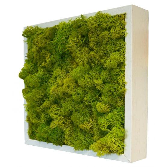 Tableaux végétaux stabilisés - Lichen
