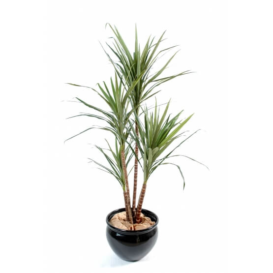 Dracaena artificiel Marginata