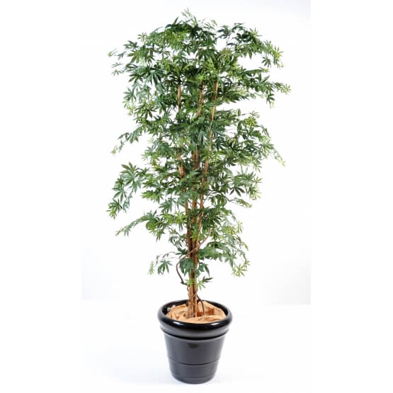 Aralia new erable artificiel vert