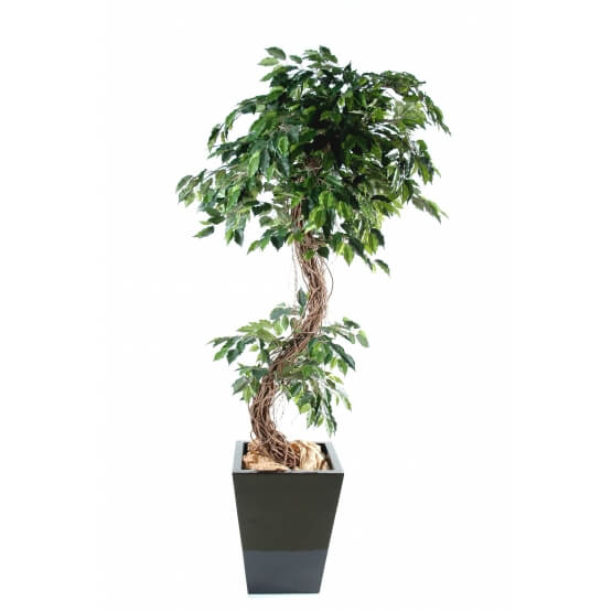 "Ficus artificiel ""S"" tronc bois naturel"