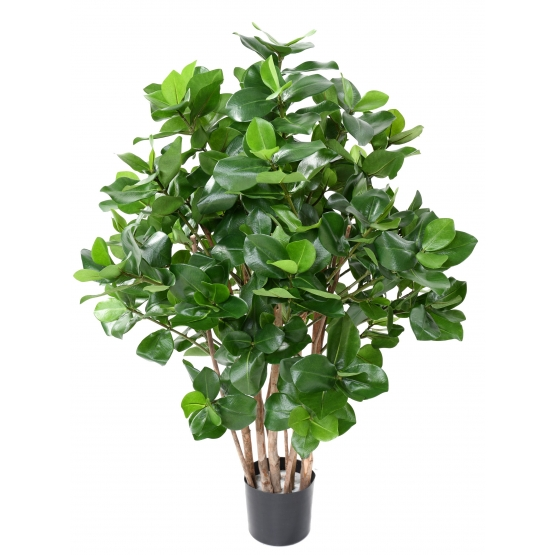 Clusia buisson artificiel