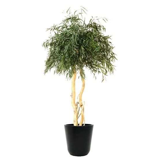 Arbre Eucalyptus Stabilisé