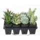 Cactus artificiel et Succulent artificiel assortis