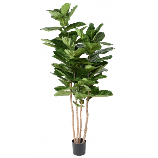 Ficus Lyrata artificiel Multitroncs