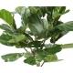 Ficus Lyrata artificiel TIGE