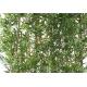 Haie de Bambous Japanese DENSE anti UV