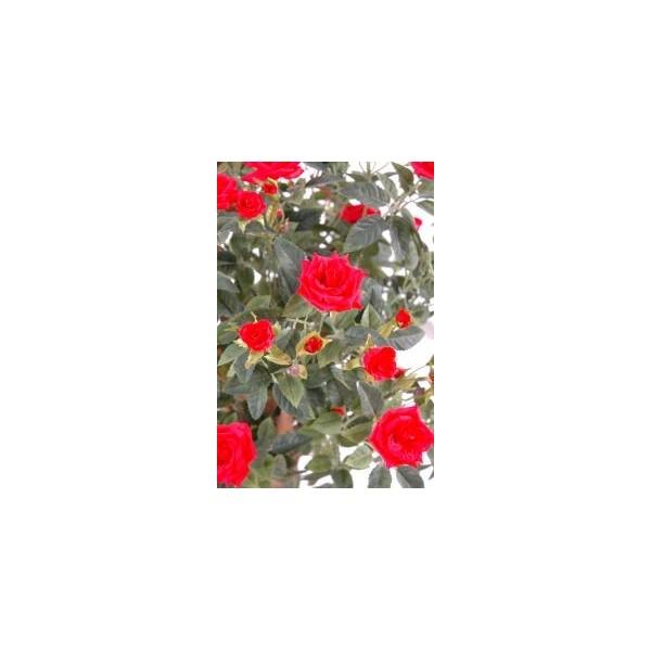 arbre et plante artificielle fleurie partir de 55. Black Bedroom Furniture Sets. Home Design Ideas