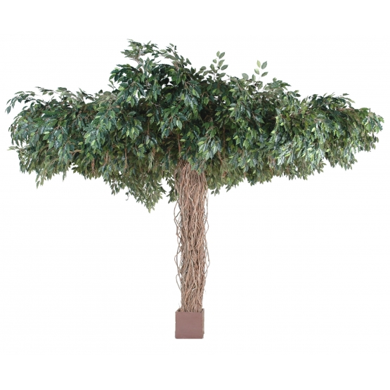 Ficus artificiel liane Umbrella