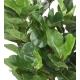Ficus Lyrata artificiel Buisson