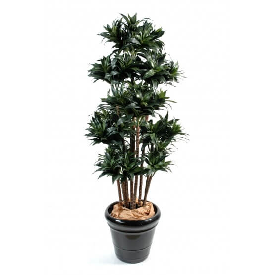 Dracena artificiel fragans compacta