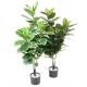 Ficus artificiel (Rubber tree)