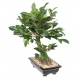 Bonsaï artificiel Ficus