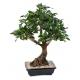 Bonsaï artificiel Ficus 58 CM