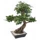 Bonsaï artificiel Ficus 78 CM