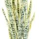 Plante artificielle Sanseveria