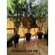 Bambou artificiel Japanese résistant aux UV - 5 hauteur au choix
