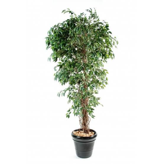 Ficus artificiel tronc bois liane