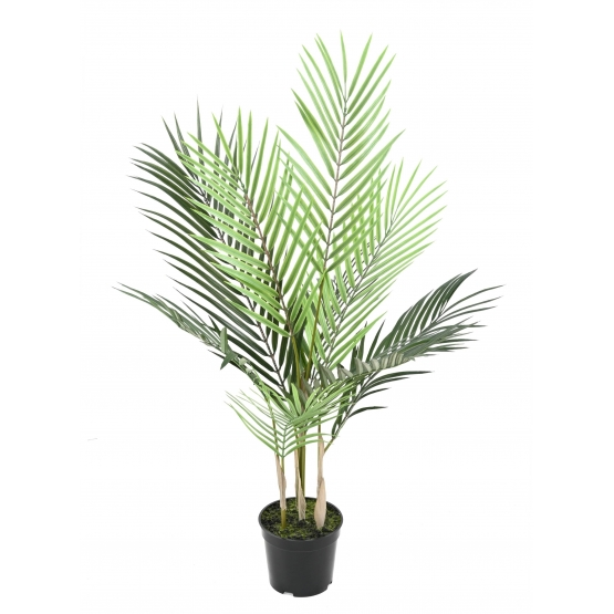 Areca artificiel